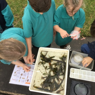 searching for Macro- invertebrates